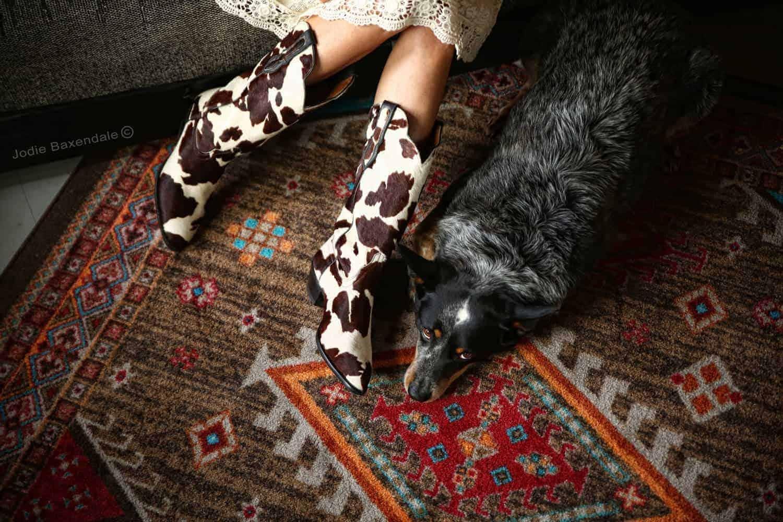 Carpet - Boston Terrier